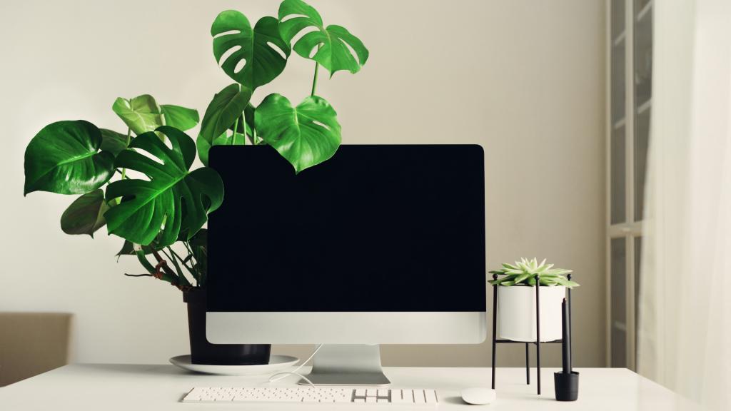 Kotitoimiston sisustuksessa on hyvä käyttää apunaan biofiilista suunnittelua kasvien avulla